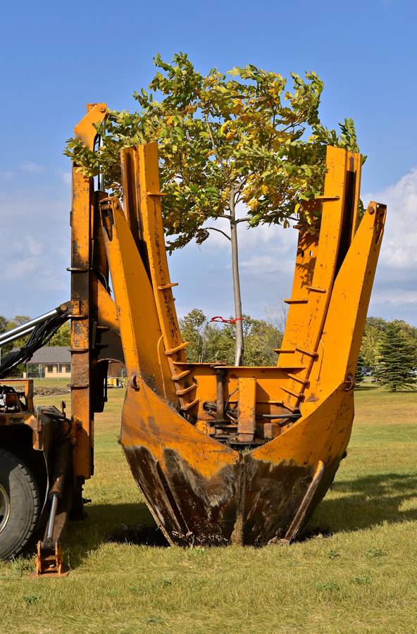 Tree Transplanting and Sales | Brainerd Tree Moving and Sales